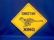 b099b-cheetahcrossing